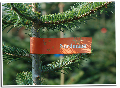 Weihnachtsbaum Ab Wann.Weihnachtsbäume Ab Hof ᐅ Tannen Selbst Sägen Bei Fam Windhorst In